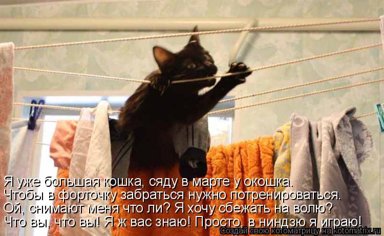 если кот убежал из квартиры день открытия Детской