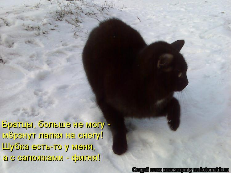 Котоматрица: Братцы, больше не могу -  мёрзнут лапки на снегу! Шубка есть-то у меня, а с сапожками - фигня!