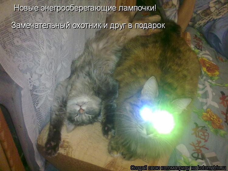 Котоматрица: Новые энегросберегающие лампочки! Замечательный охотник и друг в подарок