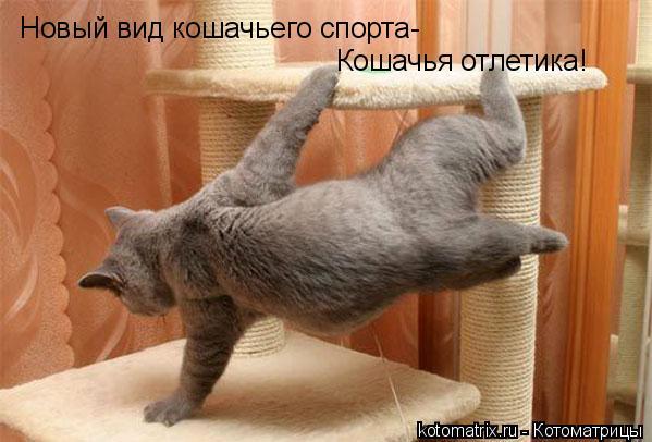 Котоматрица: Новый вид кошачьего спорта-  Кошачья отлетика!