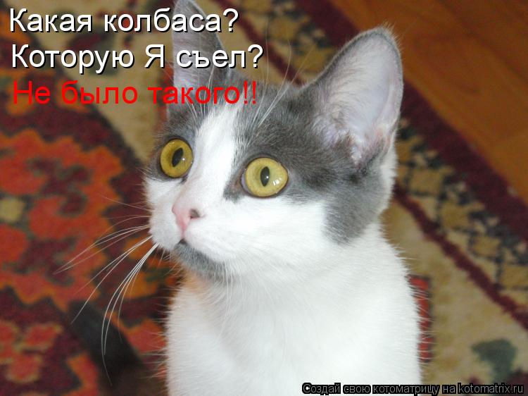 Котоматрица: Какая колбаса? Которую Я съел? Не было такого!!