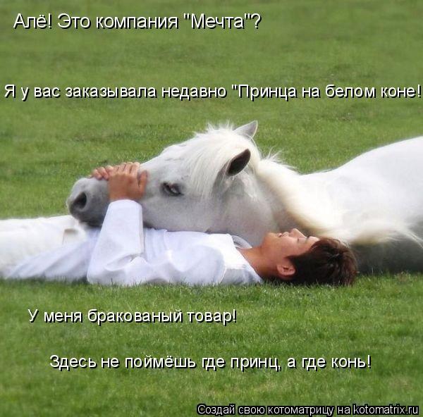 """Котоматрица: Алё! Это компания """"Мечта""""? Я у вас заказывала недавно """"Принца на белом коне! У меня бракованый товар! Здесь не поймёшь где принц, а где конь!"""