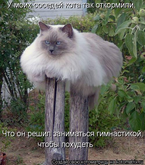 Котоматрица: У моих соседей кота так откормили, Что он решил заниматься гимнастикой, чтобы похудеть