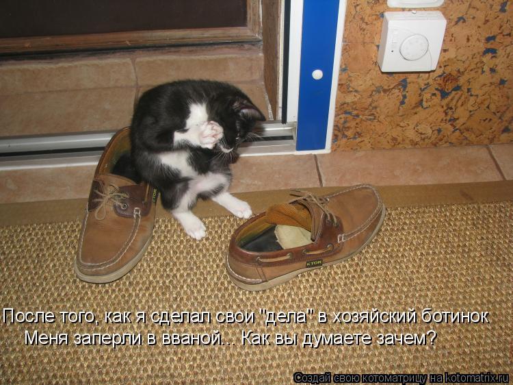 """Котоматрица: После того, как я сделал свои """"дела"""" в хозяйский ботинок Меня заперли в вваной... Как вы думаете зачем?"""