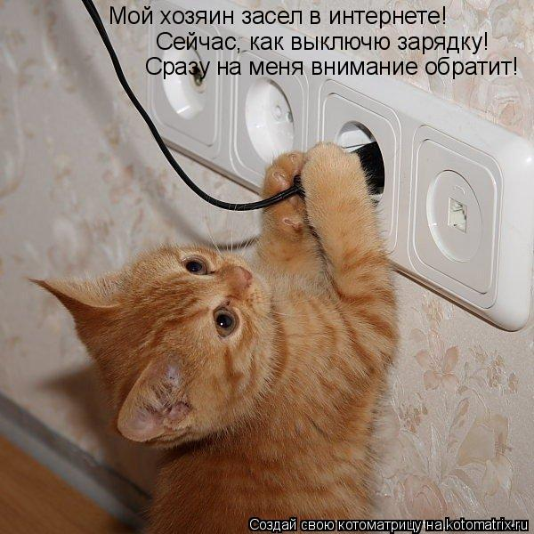 Котоматрица: Мой хозяин засел в интернете!  Сейчас, как выключю зарядку! Сразу на меня внимание обратит!