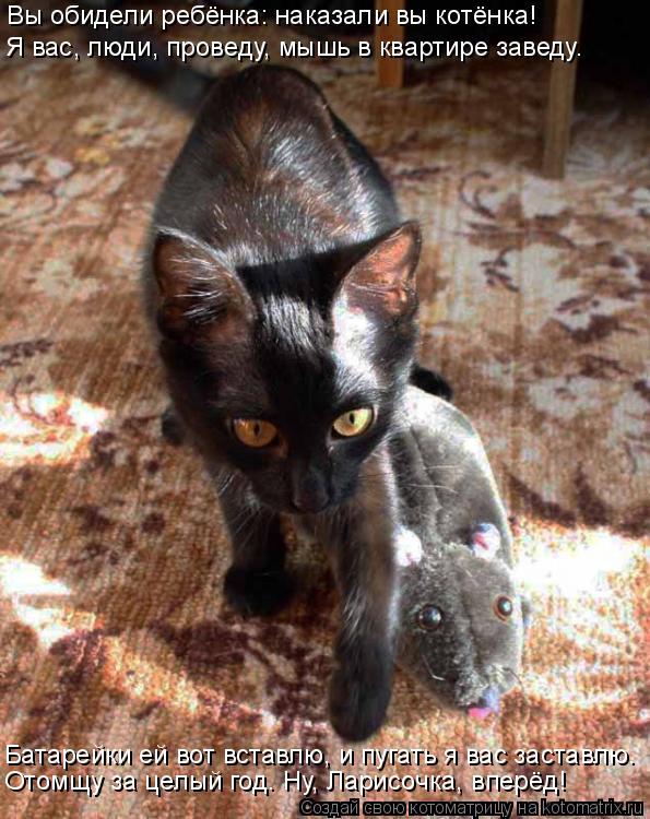 Котоматрица: Вы обидели ребёнка: наказали вы котёнка! Я вас, люди, проведу, мышь в квартире заведу. Батарейки ей вот вставлю, и пугать я вас заставлю. Отомщ