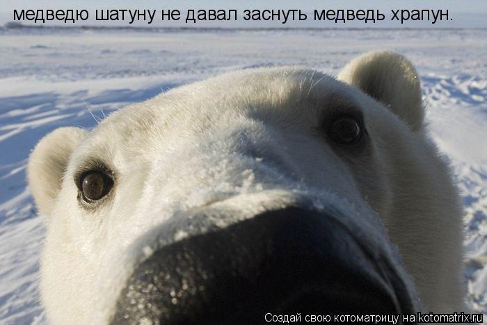 Котоматрица: медведю шатуну не давал заснуть медведь храпун.