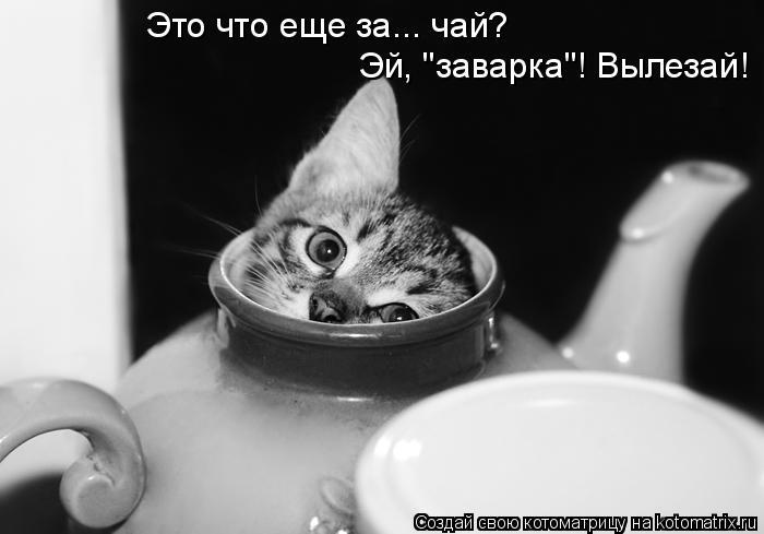 """Котоматрица: Это что еще за... чай? Эй, """"заварка""""! Вылезай!"""
