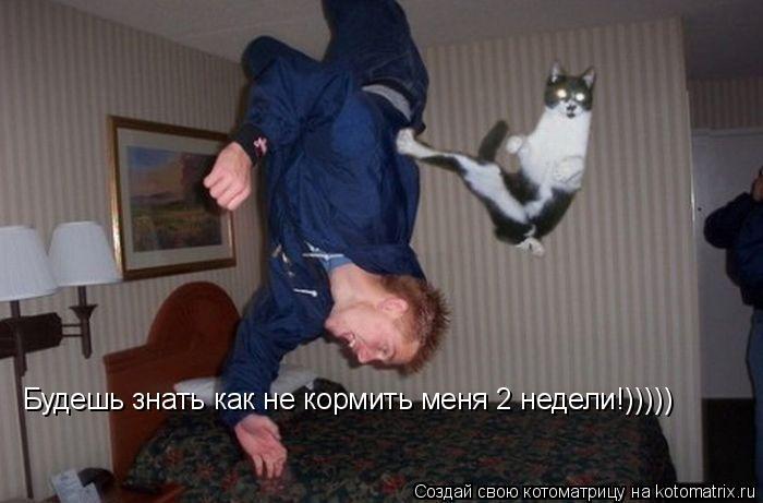 Котоматрица: Будешь знать как не кормить меня 2 недели!)))))