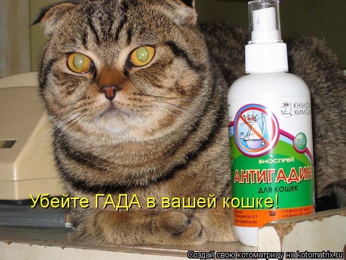 Котоматрица: Убейте ГАДА в вашей кошке!