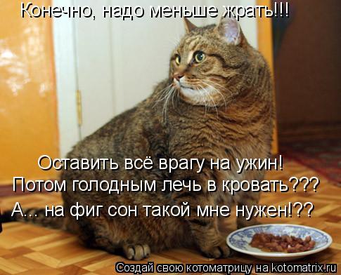 Несколько смешных фото котов, которые я увидела в альбоме Надежды...