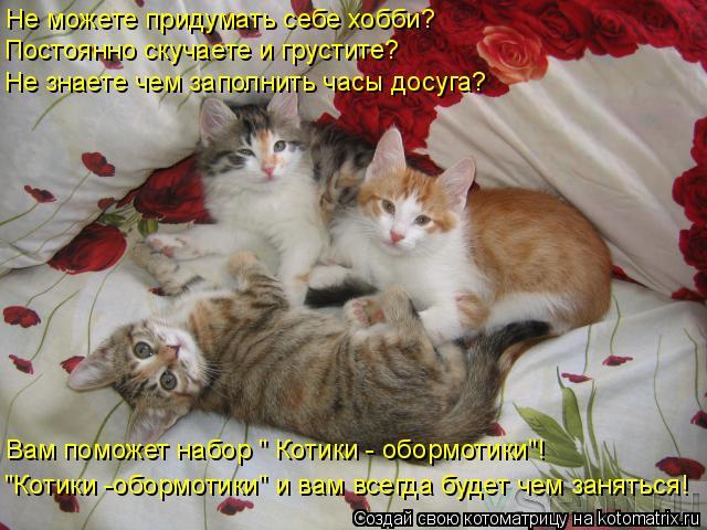 """Котоматрица: Не можете придумать себе хобби? Постоянно скучаете и грустите? Не знаете чем заполнить часы досуга? Вам поможет набор """" Котики - обормотики""""!"""