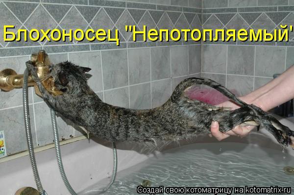 """Котоматрица: Блохоносец """"Непотопляемый"""""""