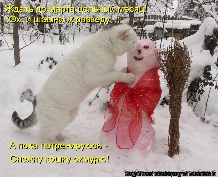 Котоматрица: А пока потренируюсь -  Снежну кошку охмурю! (Ох, и шашни ж разведу...) Ждать до марта цельный месяц!