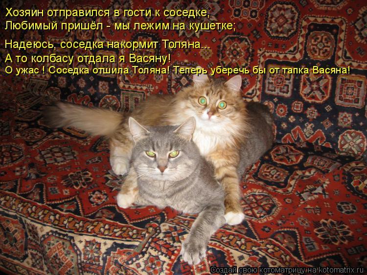 Котоматрица: Хозяин отправился в гости к соседке, Любимый пришёл - мы лежим на кушетке; Надеюсь, соседка накормит Толяна... А то колбасу отдала я Васяну! О