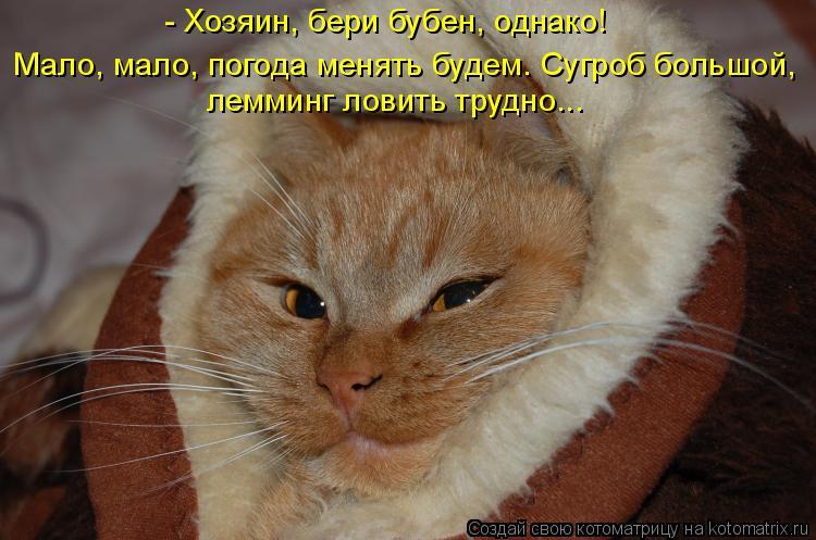 Котоматрица: - Хозяин, бери бубен, однако! лемминг ловить трудно... Мало, мало, погода менять будем. Сугроб большой,