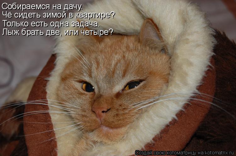 Котоматрица: Собираемся на дачу. Чё сидеть зимой в квартире? Только есть одна задача. Лыж брать две, или четыре?