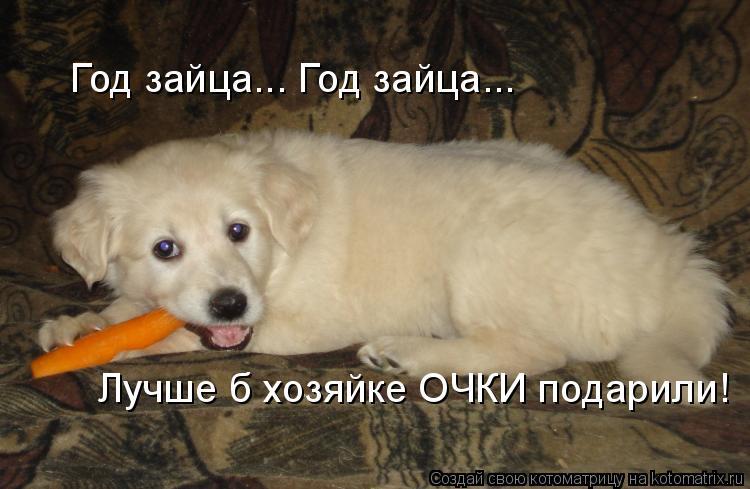 Котоматрица: Год зайца... Год зайца... Лучше б хозяйке ОЧКИ подарили!