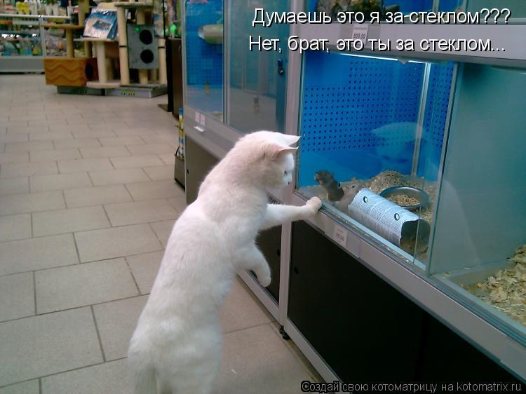 Котоматрица: Думаешь это я за стеклом??? Нет, брат, это ты за стеклом...