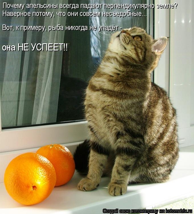 Почему апельсины всегда падают перпендикулярно земле? Наверное потому,