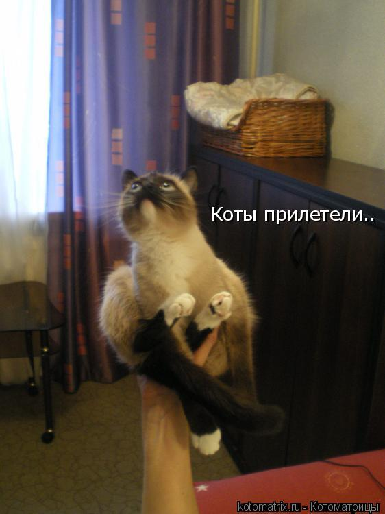 Котоматрица: Коты прилетели..