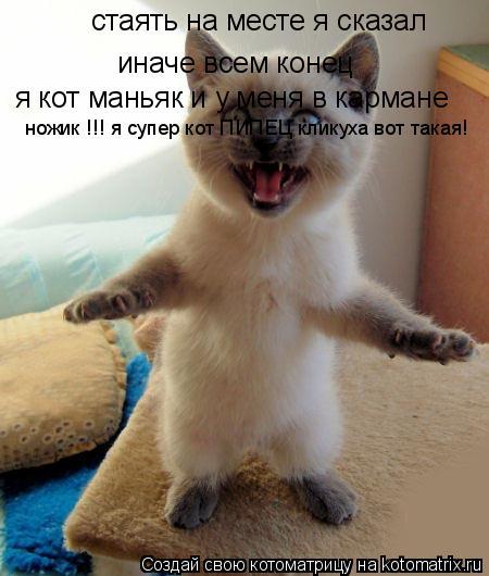 Котоматрица: стаять на месте я сказал  иначе всем конец я кот маньяк и у меня в кармане ножик !!! я супер кот ПИПЕЦ кликуха вот такая!