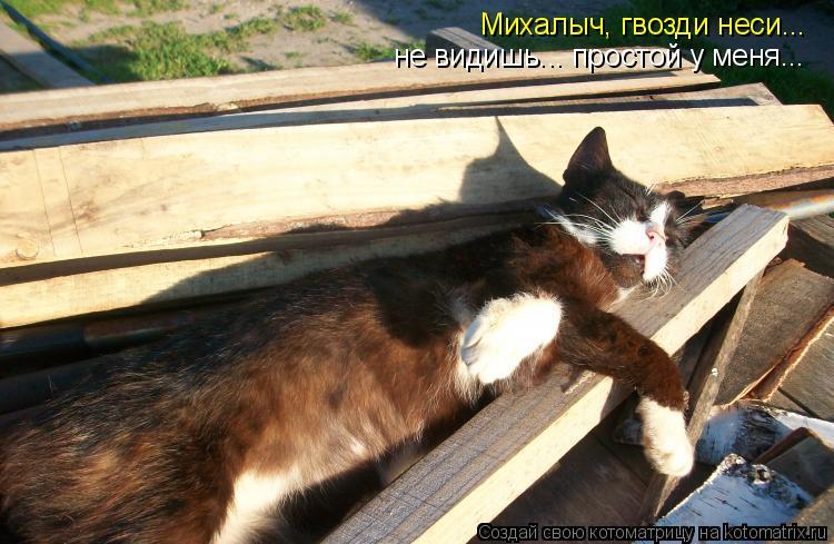Котоматрица - Михалыч, гвозди неси... не видишь... простой у меня...