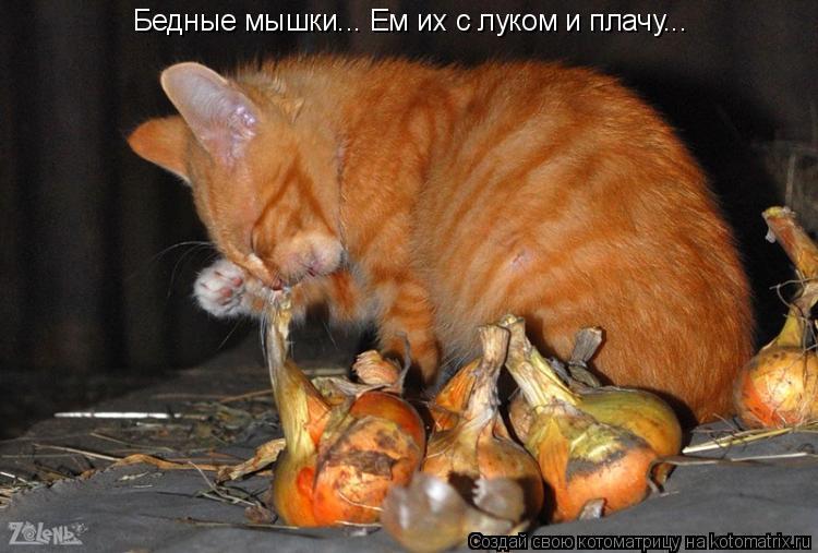 Котоматрица: Бедные мышки... Ем их с луком и плачу...