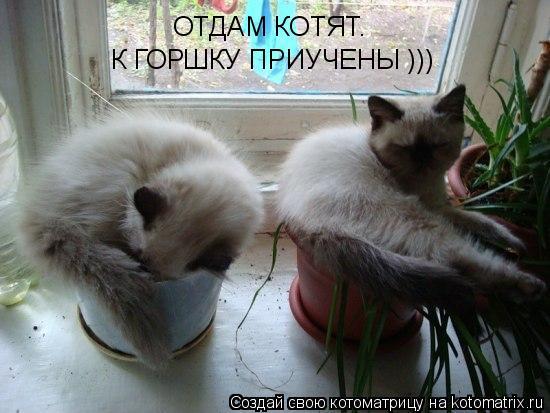Котоматрица: ОТДАМ КОТЯТ. К ГОРШКУ ПРИУЧЕНЫ )))