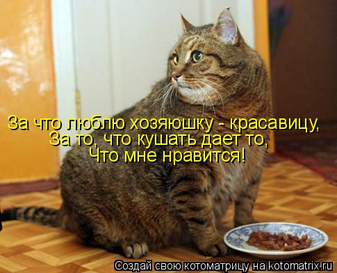 Котоматрица: За что люблю хозяюшку - красавицу, За то, что кушать дает то,  Что мне нравится!