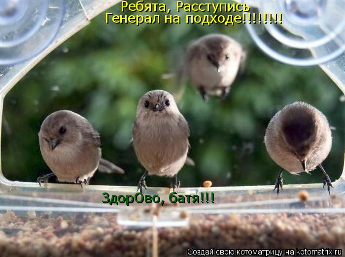 Котоматрица: Ребята, Расступись Генерал на подходе!!!!!!!! ЗдорОво, батя!!!