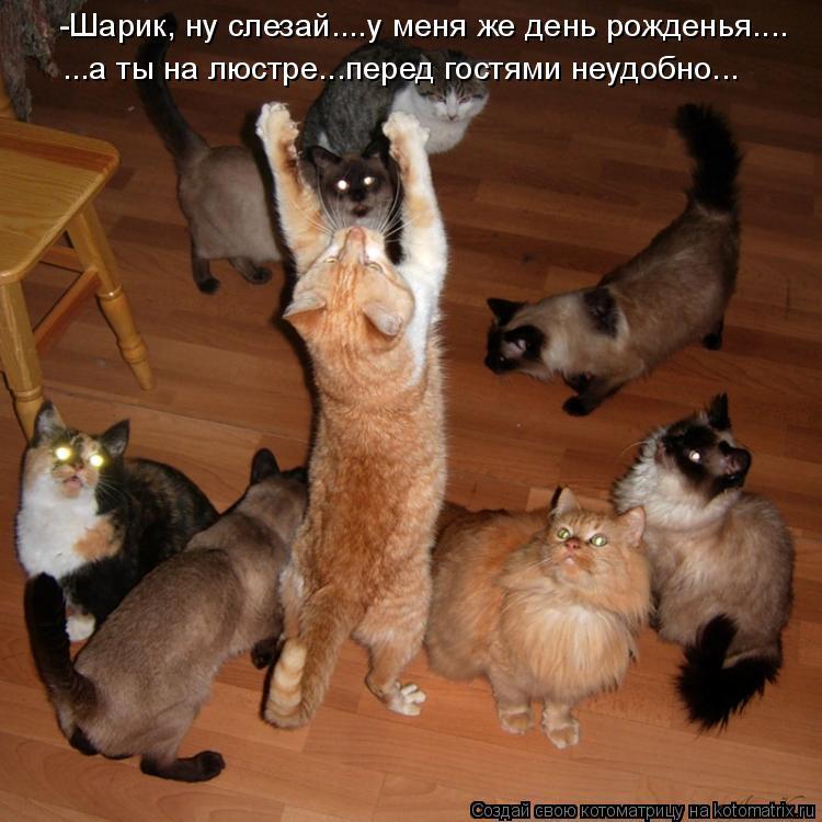 Котоматрица: -Шарик, ну слезай....у меня же день рожденья.... ...а ты на люстре...перед гостями неудобно...