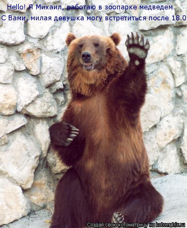 Котоматрица: Hello! Я Михаил, работаю в зоопарке медведем. С Вами, милая девушка могу встретиться после 18.00