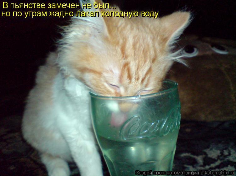 Котоматрица: В пьянстве замечен не был... но по утрам жадно лакал холодную воду