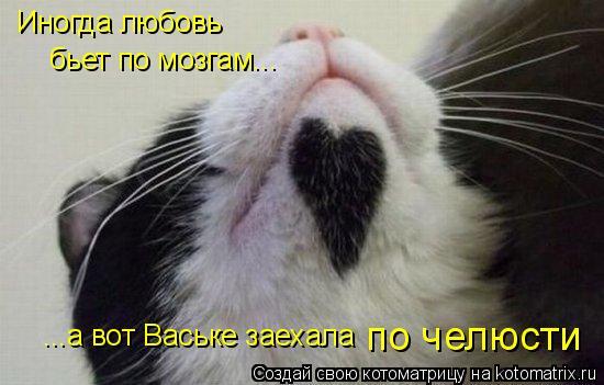 Котоматрица: Иногда любовь ...а вот Ваське заехала по челюсти бьет по мозгам...