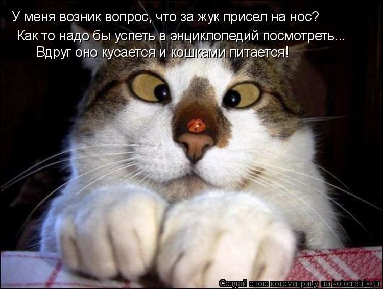 Котоматрица: У меня возник вопрос, что за жук присел на нос? Как то надо бы успеть в энциклопедий посмотреть... Вдруг оно кусается и кошками питается!