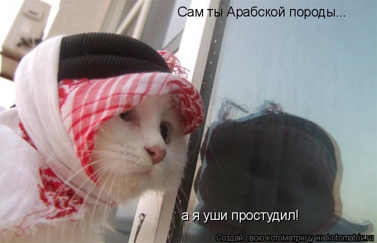 Котоматрица: Сам ты Арабской породы... а я уши простудил!