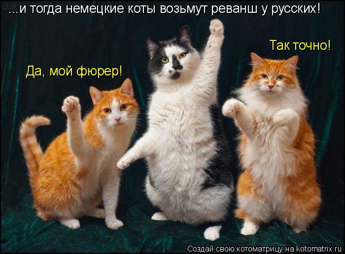 Котоматрица: ...и тогда немецкие коты возьмут реванш у русских! Да, мой фюрер! Так точно!