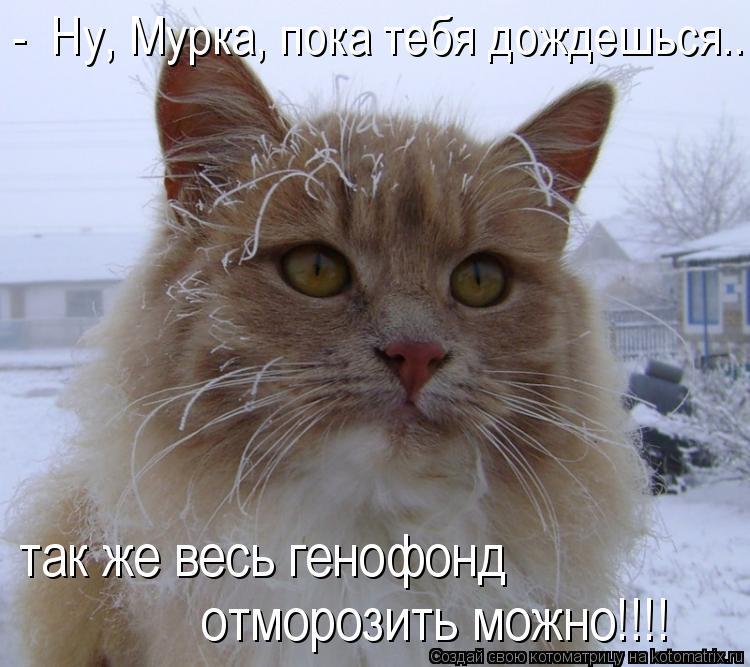 Котоматрица: -  Ну, Мурка, пока тебя дождешься...  так же весь генофонд  отморозить можно!!!!