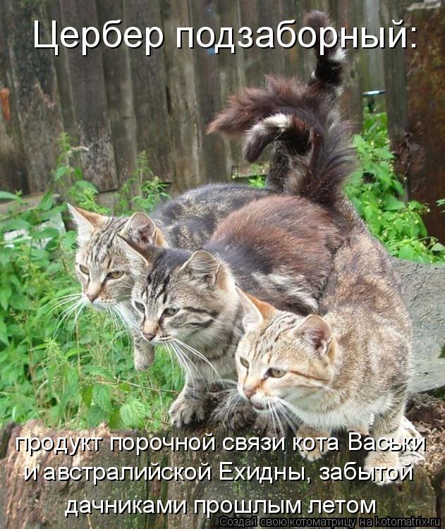 Котоматрица: Цербер подзаборный: продукт порочной связи кота Васьки  и австралийской Ехидны, забытой дачниками прошлым летом