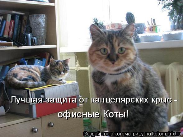 Лучшая защита от канцелярских крыс - офисные Коты!