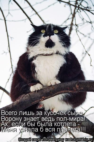 Котоматрица: Всего лишь за кусочек сыра Ворону знает ведь пол-мира! Ах, если бы была котлета - Меня узнала б вся планета!!!