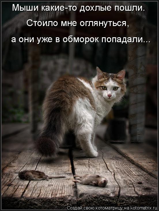 Котоматрица: Мыши какие-то дохлые пошли.  Стоило мне оглянуться,  а они уже в обморок попадали...