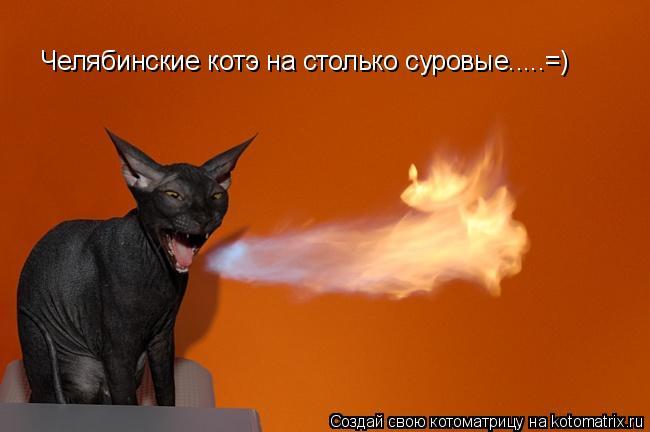 Котоматрица: Челябинские котэ на столько суровые.....=)