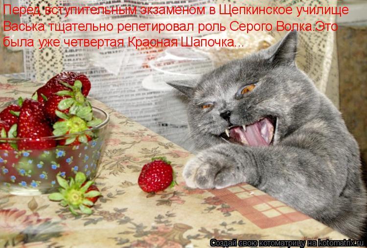 Котоматрица - Перед вступительным экзаменом в Щепкинское училище Васька тщательно ре