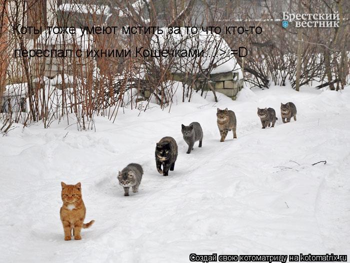 Котоматрица: Коты тоже умеют мстить за то что кто-то переспал с ихними Кошечками....>:=D
