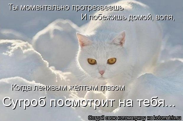 Котоматрица: Ты моментально протрезвеешь И побежишь домой, вопя, Когда ленивым жёлтым глазом Сугроб посмотрит на тебя...