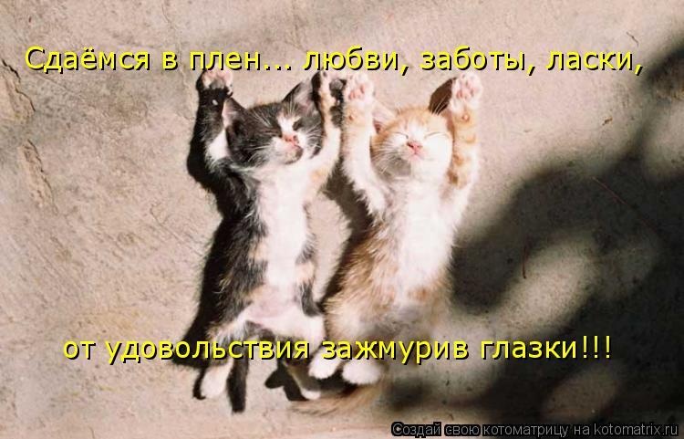 Котоматрица: Сдаёмся в плен... любви, заботы, ласки, от удовольствия зажмурив глазки!!!