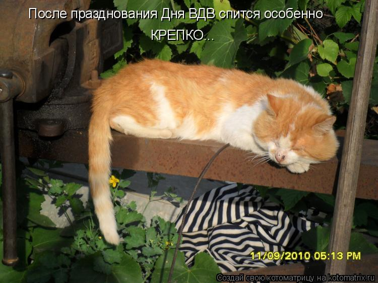 Котоматрица: После празднования Дня ВДВ спится особенно КРЕПКО...