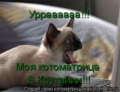 Котоматрица: Урраааааа!!! Моя котоматрица В Крутииии!!!